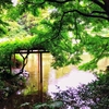 【観光】『新宿御苑』────濃く鮮やかな緑が美しい、都会の庭園