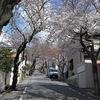 えっ!桜のトンネルは、一体どないなったんやろ?