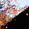 【photo】宮島の紅葉/Autumn leaves at Miyajima
