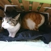 猫コタツを作った件。風邪の中で今日したこと。