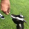 小動物と戯れると否が応でも癒される
