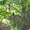 野鳥撮影にでかけました。
