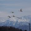 白山と白鳥(前編)