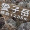 *屋久島のシダなど...