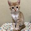 P7【保護猫日記】やんちゃな女の子「コハク」