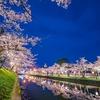 日本の桜の名所100選の一つ鶴岡公園の桜を撮ってきた