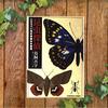 【ゴキブリが主人公!?】〝昆虫探偵〟鳥飼 否宇―――昆虫の世界で起こる様々な事件!
