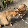 猫愛を叫んでみる⑵