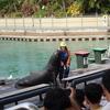 シーワールド ゴールドコーストにある水族館と遊園地  日本とは違うアシカショーなど