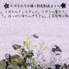 0408【カワセミが魚捕食。求愛給餌。花筏】鳩の求愛。セグロセキレイ水浴び。カラスが何か食べる。コゲラの巣穴。鶴見川水系恩田川の野鳥撮影をコンデジで #身近な生き物語 #カワセミ #桜