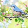 「朝型・夜型」人間って英語で何という?「鳥」を使って表現するってホント?