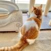 カリカリからウェットフードに切り替えて変化があった愛猫のトイレ事情。
