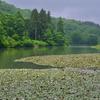柳市池(新潟県長岡)