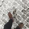 12月1日 リガで雪が積もり始めました。かも?
