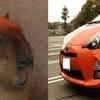 カピバラのことが好きすぎてトヨタのアクアの顔がカピバラに見えてきた