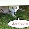 かわいそうな犬