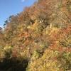 紅葉の秋ですね~