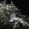 上野公園の夜桜見物