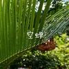 7月の夏の庭はセミの抜け殻(空蝉)だらけ~Part1〜