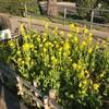春の陽気の隅田川テラス24キロで筋肉痛発生^^;