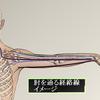 肘のしこりの詳細説明