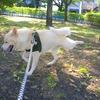 愛犬と散歩をして気づいた大切なこと