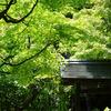 白鳥庭園の透過光の新緑
