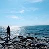 バルト海のアオコ、シアノバクテリア