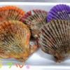 ヒオウギ貝を調理して食べた感想【カラフルなホタテ?!】