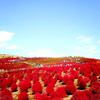 【ネモフィラ&コキア】国営ひたち海浜公園で行列に並ばずに入場する方法(2018.4月)