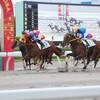 大井競馬場のレース 写真