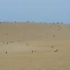 鳥取砂丘でポケモンGOやって捕まえられるポケモン