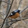 韓国で鳥を撮影