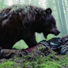 レオナルド熊の死と新生 レヴェナント:蘇りし者