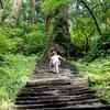 羽黒山 ミシュラン三つ星の杉並木と国宝五重の塔