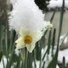 雪に埋もれた植物たち