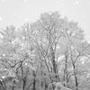 2016年末一人旅 第四週(213)久慈の雪景色2