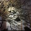 磐田市で庭木にできたハチの巣を駆除してきました