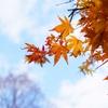 紅葉2 Autumn leaves 2