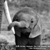 時代はマストドン?君たち、そんなことより赤ちゃん象を愛でるんだ!!
