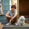 ドラマ『僕とシッポと神楽坂』の犬(ダイキチ)がかわいい!嵐・相葉との絡みも楽しみ