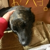 甲斐犬サン、6月の目標を立てるゥッの巻〜(9`・ω・)9頑張リマス.+゚*。:゚+