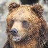 長野県の熊出没情報!北アルプス・中央アルプス・八ヶ岳のツキノワグマ生息数!