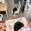 我が家の猫法陣の完成からのニャンモナイト!!