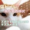 猫トイレ 我が家の現状♡ ズボラ主婦の臭い対策オススメ方法