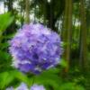 梅雨明け静か竹林 傍に咲く紫の花