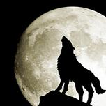 人狼アルティメット(ア式部屋)の作戦、立ち回りと攻略について