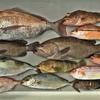 スロー系のジグで「美味しい魚」がほどよく釣れました~🎵  【  日本海ジギング💪  】