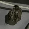 浜松市で軒下にできた蜂の巣の駆除してきました!あれ?別の場所にもう一個巣を発見!?