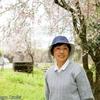 背景は自宅近くの枝垂桜